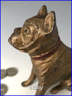 C. 1920 AC Williams or Hubley Cast Iron Boxer Bulldog Still Penny Dog Bank #357