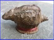 RARE J. E. Stevens Cast Iron Coin Bank Shell Out Sea Shell Original Antique